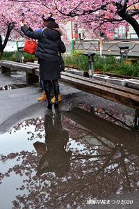 雨の中を‥ 『三浦海岸 桜まつり2020』 - 写愛館