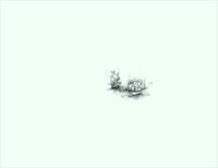 《光の春》 - 『ヤマセミの谿から・・・ある谷の記憶と追想』