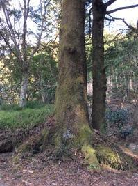 アカシックレコードの基礎と自然霊と繋がるワークショップと北茨城 - イギリス ウェールズの自然なくらし
