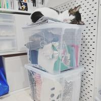 ミシン部屋の猫 - 白くて丸いもの