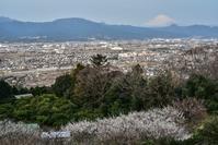 田島、下曽我、大井 - 風とこだま
