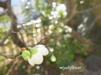 白梅ほほえむ - 風と花を紡いで