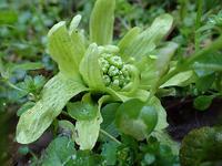 早春の矢滝城山 - 清治の花便り