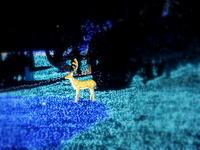 しあわせ回廊 なら瑠璃絵 * ②奈良春日野国際フォーラム 甍~I・RA・KA~ - ぴきょログ~軽井沢でぐーたら生活~