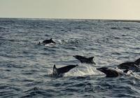 久しぶりにイルカの大群の狩りに出会う - COLORCODE