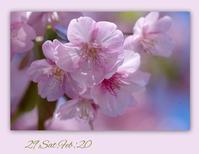 2月29日閏(うるう)年 - 花ありて 日々