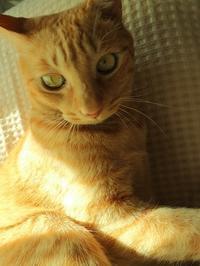 肉球の日 - 猫がキルトで寝てる間に