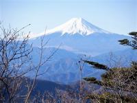 奥多摩三頭山で静かな奥多摩を味わう(後編)Mount Mito in Chichibu Tama Kai National Park - やっぱり自然が好き