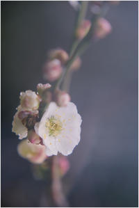 麗人 - HIGEMASA's Moody Photo