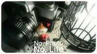 Cold    rain  ! - LAGOMな……PHOTO   LIFE !