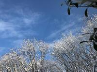 冬のブルー&ホワイト - Bleu Belle Fleur☆ブルーベルフルール