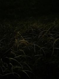 『皺』(パコ・ロカ)、加齢と忘れについて - 世話要らずの庭