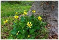 木の根元の黄色い花 -  one's  heart