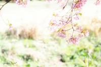 花びら - jumhina biyori*