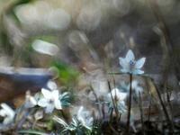 大柿花山、春めいて来て3 - 光の音色を聞きながら Ⅴ