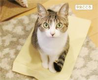 猫のいる会議室 - ちいさなチカラ