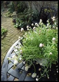 白い花 - 小さな幸せ