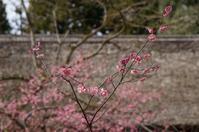 公園歩けば・・・(梅の花) - きょうから あしたへ その2