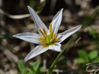 春の花たち - 風の吹くまま