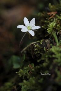 ~麗しい春~ - My  Photo  Life