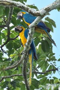 アマゾン川(ペルー)の野鳥と動物 - oto-のPhoto Gallery