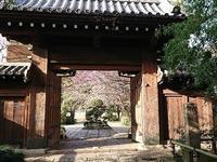 枝垂れ梅を見に - jujuの日々