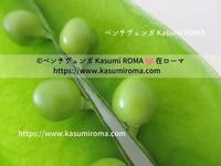 """""""食べてって♪「生!グリンピース」@イタリア、今!が旬の春野菜♪"""" ~ Piselli ~ - 『ROMA』ローマ在住 ベンチヴェンガKasumiROMAの「ふぉとぶろぐ♪ 」"""