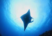 ブラックマンタと鯨の歌 - COLORCODE