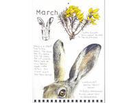 3月ハリエニシダの花、野うさぎのボクシング - ブルーベルの森-ブログ-英国のハンドメイド陶器と雑貨の通販