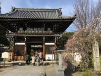 京都・奈良冬の旅'20その2 - IL PARADISO VERDE DI NORINA ~美瑛印象派ガーデン便り~