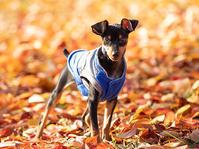 ウルくんの写真第2弾 - いとしい犬たちのフォトブログ