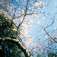 花咲く公園 - Ippo Ippo