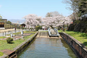 京都2019桜 - PREMIUM SPECIAL