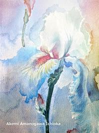 アイリス(愛離守)Iris - Akemi Amanogawa Ichi  のギャラリー