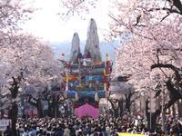 【4/5】桜並木を山車が通る様は圧巻!高さ約15m「日立風流物」見学!日立さくらまつり&桜咲く雨引観音見学バスツアー - 日帰りツアー・社会見学・東京観光・体験イベン
