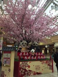 サクラサク(^^♪ - 上野 アメ横 ウェスタン&レザーショップ 石原商店