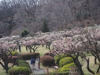 梅の薬師池公園を散歩しました。(2) - ご無沙汰写真館