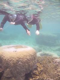 寒空復活と久々のあれ~大度海岸(ジョン万ビーチ・大度浜海岸)半日シュノーケリング~ - 大度海岸(ジョン万ビーチ・大度浜海岸)と糸満でのシュノーケリング・ダイビングなら「海の遊び処 なかゆくい」