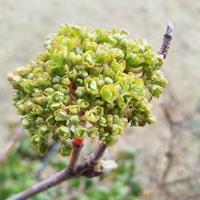 春近し!庭の花木の蕾たち3種 - 健気に育つ植物たち