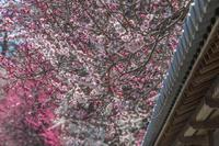 春が来たか?! - デジカメ写真集