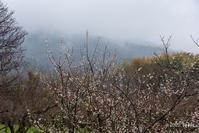 三輪山と梅 - toshi の ならはまほろば