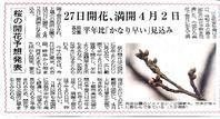 20200306 【異常気象】桜満開、4月2日 - 杉本敏宏のつれづれなるままに