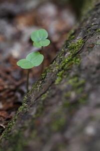 芽生え - ecocoro日和