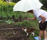 菜ノハナの花咲く畑で - COMPLEX CAT