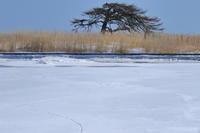 冬の羅臼と道東撮影2-2 - ぶらりさっぽろ♪~ 思うまま、気ままに♪~