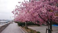 尾道の春散歩 - Tea's  room  あっと Japan
