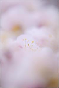 淡雪 - HIGEMASA's Moody Photo