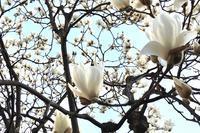 春を満喫 - RABOKIGOSHI  PRESS  BLOG