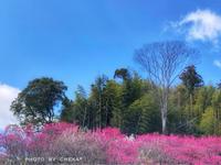 梅林寺の紅白梅 - C* 日和