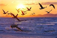 冬の道東行ってきました#1流氷のオオワシ - cuccooの野鳥エトセトラ